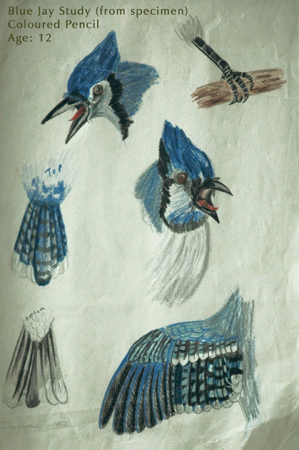 Michael Dumas_BlueJay_ChildhoodDrawing