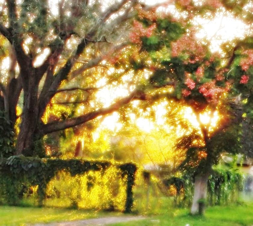 James McCarthy neighborhood photo 2012-01-04 20 51 10 (2)