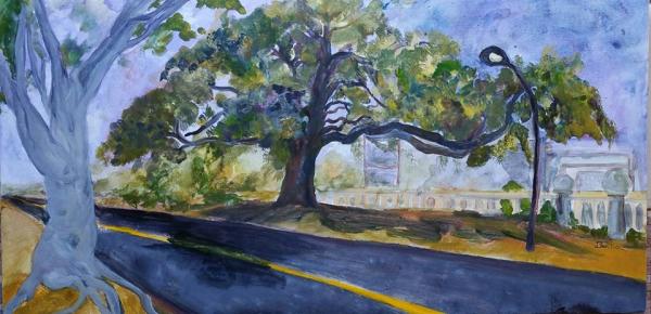 Jennifer Bentson Oak Tree on Green Street and Orange Grove