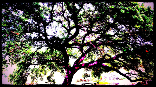 jennifer-bentson-oaks